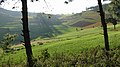Pangetkon, Shan Hills, Myanmar, Landscape with green fields in central Myanmar, Shan State.jpg