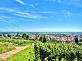 Panorama sur Soultz, depuis le vignoble du Hornstein. (2).jpg