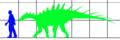 Paranthodon size.png