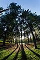 Parco locale del bosco di Legnano 2.jpg