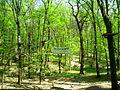 Park linowy, Racibórz 4.JPG