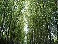 Park of Versailles, 2005 (30422179).jpg