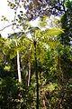 Parque da Cantareira-Vegetação Nativa 07.jpg