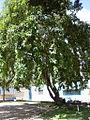 Parque del Este 2012 092.JPG