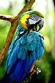 Parrot (5741198598).jpg