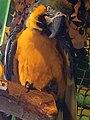 Parrot on a stick.jpg
