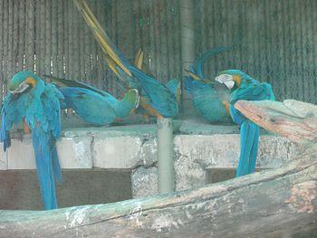 Parrot paradise.jpg