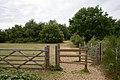Part of Netley Common - geograph.org.uk - 1402757.jpg