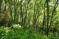 Passage Grove, Tidenham (9662).jpg