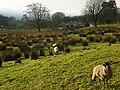 Pasture, Alston - geograph.org.uk - 1067553.jpg