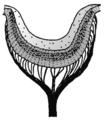 Patella eye pit.png