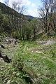 Path down the embankment - geograph.org.uk - 1295466.jpg