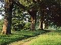 Path through Levens Park - geograph.org.uk - 1053279.jpg
