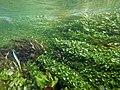 """Paysage subaquatique Subaquatic landscape rivière """"Les Baillons"""" à Enquin-sur-Baillons F Lamiot 09.jpg"""