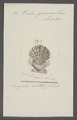 Pecten griseus - - Print - Iconographia Zoologica - Special Collections University of Amsterdam - UBAINV0274 075 01 0030.tif