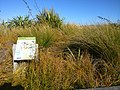 Petone Wharf Dunes Restoration Project Sign.jpg