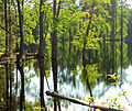 Pfly - Forest, meet water. Water, forest. (by-sa).jpg