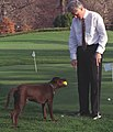 Photograph of President William Jefferson Clinton Playing with Buddy the Dog on the Putting Green on the South Lawn- 02-10-1998 (6461529331) (cropped).jpg