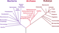Phylogenetic tree-es.png