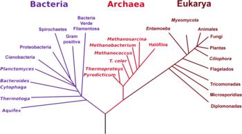 Resultado de imagen de Mirando el árbol filogenético de la Vida, nos damos cuenta de su diversidad y complejidad