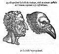 Physiognomonie corbeau.jpg