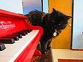 Piano de juguete Schoenhut (rojo) 17.jpg
