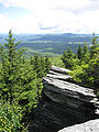 Picea rubens Flat Rock Grandfather Mountain.jpg