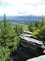 Picea rubens Flat Rock Grandfather Mountain.jpg