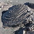 Pico de Fogo-Lave cordée (7).jpg