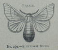 Picture Natural History - No 259 - Female Silkworm Moth.png