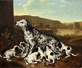 Dalmatian dog with puppies