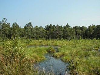 Lüneburg Heath - Pietzmoor near Schneverdingen