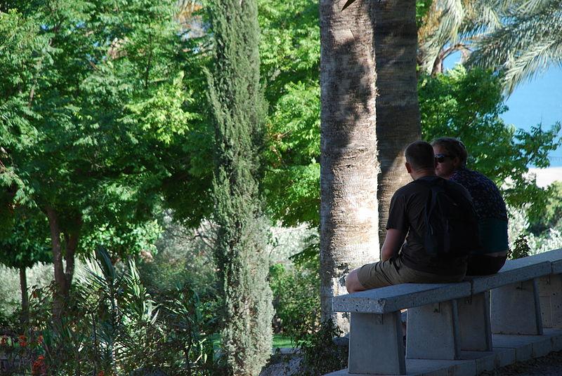 Tiberias Trees