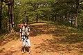 Pinus kesiya forest guide MtUgo.jpg