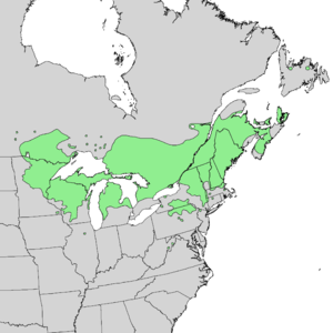 Pinus resinosa range map 1.png