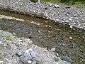 Planinski potok-Liva - panoramio.jpg