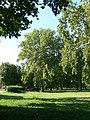 Platany Hlohovec - Plane-trees Hlohovec, Slovakia - panoramio.jpg
