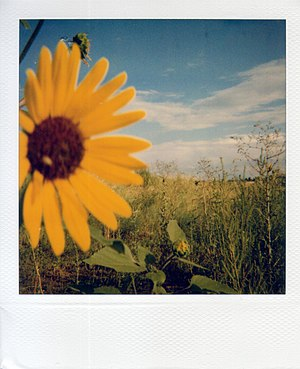 Instant film - A sample shot of Polaroid Type 600, ISO 640, color film