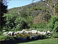Pond, Oak Glen, CA 4-27 (9008188091).jpg