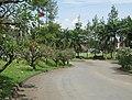 Pondok Hijau, Sersan Bajuri, Kota Bandung - panoramio.jpg
