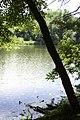 Porter Lake Trail, Forest Park, Springfield, Massachusetts - panoramio (4).jpg