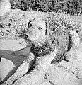 Portret van een Airdale Terrier, Bestanddeelnr 255-8654.jpg