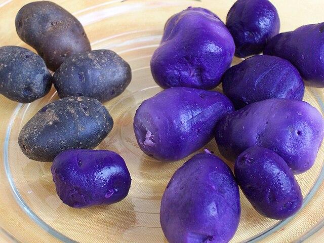 Pommes de terre (Vitelotte) cuites à l'eau (entières et épluchées).