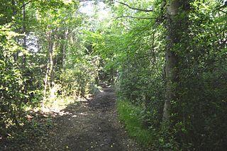 Pound Wood Essex Wildlife Trust Nature reserve