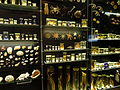 Preserved specimens - Finnish Museum of Natural History - DSC04699.JPG
