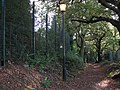 Public footpath with illumination, Crown Woods - geograph.org.uk - 1557640.jpg