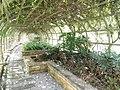 Putrajaya's Botanical Garden 09.jpg