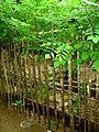 Quickstick tree live fence.jpg
