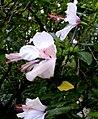Quinta Flores - panoramio.jpg