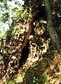 Rám-hegyi-barlang.jpg
